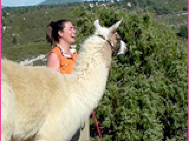 Dîtes, ça vous dirait de découvrir la Provence avec un lama ?